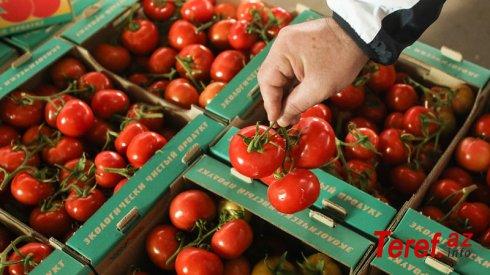 Bu ölkə Azərbaycandan pomidor idxalını dayandırdı