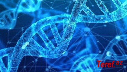 Ömrü uzadan gen kəşf edilib