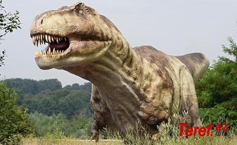 Nəhəng dinozavrın qalıqları tapıldı