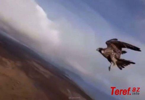 Şahin bloqerin dronunu oğurladı – VİDEO